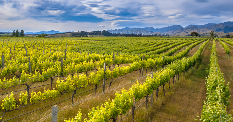 A Guide to Working in Blenheim, New Zealand